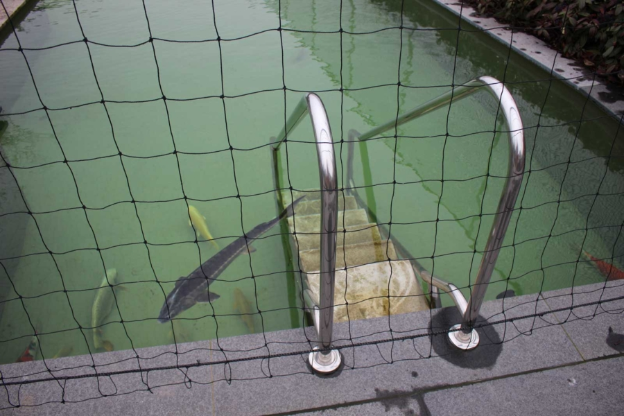 Vijver/ zwembadtrap